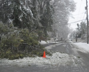 At least two trees down completely block Route 82 in East Marlborough. Trees and branches are down across the county, closing roads and making travel hazardous.