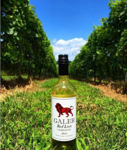 Red-Lion-Chardonnay-in-Red-Lion-Vineyard-254x300