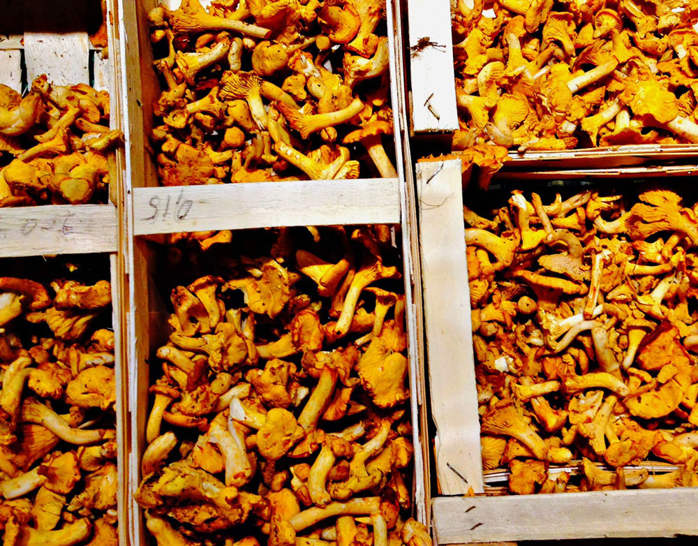 Chanterelle Mushrooms are Grown by a number of local producers and offer a fabulous taste to add to fall dishes.